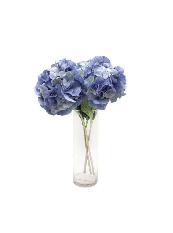 Blue Hydrangeas (Pollyanna)