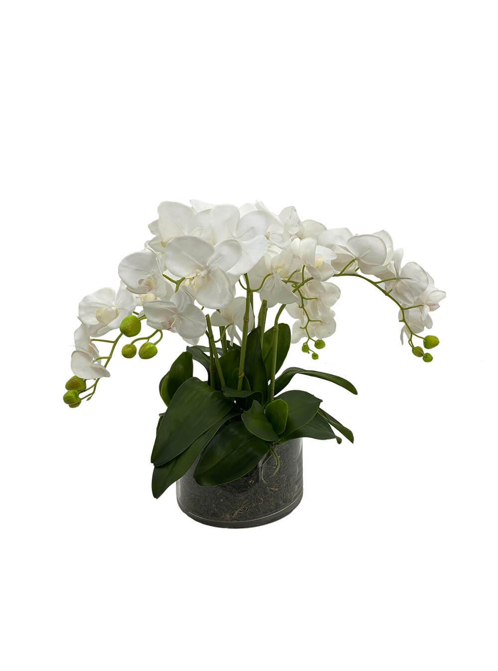 the grand phalenopsis arrangement
