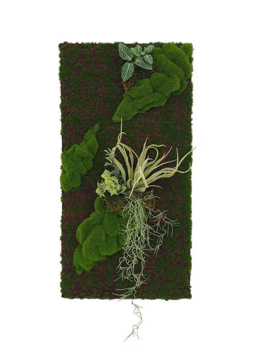 Tillandsia Moss Panel Display (Pollyanna)