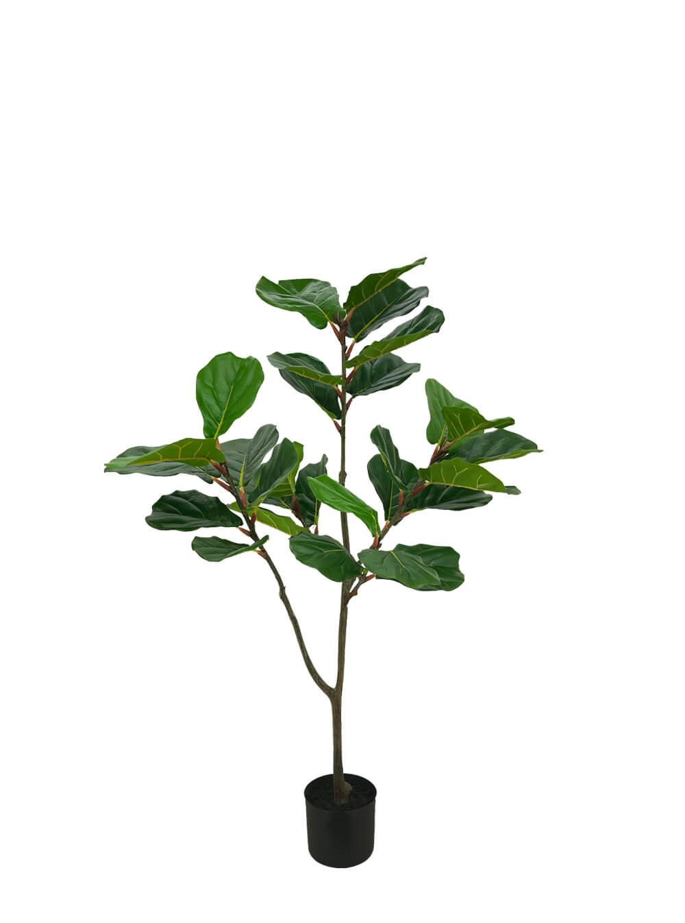 1.2 fiddle/ficus plant